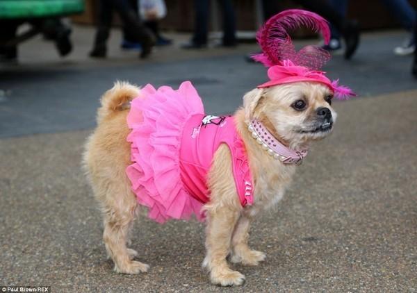Phụ nữ thanh lịch là phải mặc đầm hồng điệu đà này.