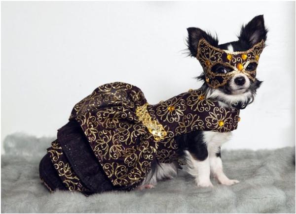 """Hóa trang đi dự dạ hội thế này thì đảm bảo hoàng tử phải... mê """"tít thò lò""""."""