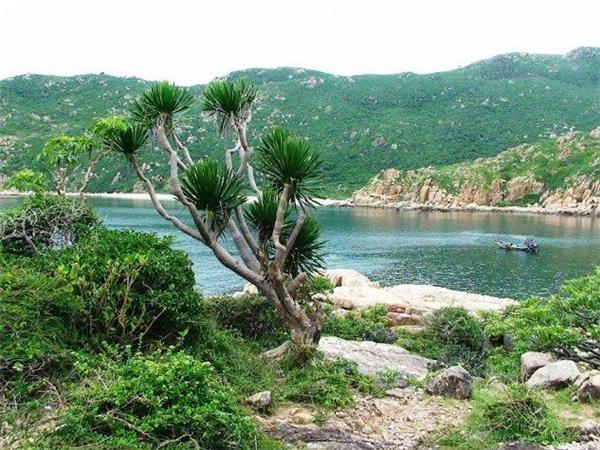"""Vườn quốc gia Núi Chúa nằm phía đông bắc tỉnh Ninh Thuận, thuộc huyện Ninh Hải, có diện tích gần 30.000ha cùng chiều dài 57km.Tuy tại đây ít mưa nhưng lại có """"Hồ treo"""" quanh năm nước trong xanh cùng nhiều con suối lớn như Lồ Ô, Đông Nha, Kiền Kiền không bao giờ cạn nước.(Ảnh: Internet)"""