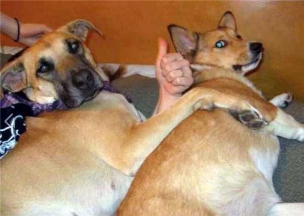 Bên chân chó, bên tay người thế thôi chứ bọn con vẫn ổn và sống tốt.