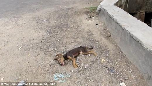 Chú chó bị bỏ rơi trên đường phố Ấn Độ. (Ảnh: Internet)