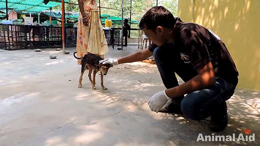 Dưới sự quan tâm chăm sóc của những nhân viên trạm cứu hộ động vật thuộc tổ chức Animal Aid Unlimited, chú chó đã hồi phục sức khoẻ. (Ảnh: Internet)