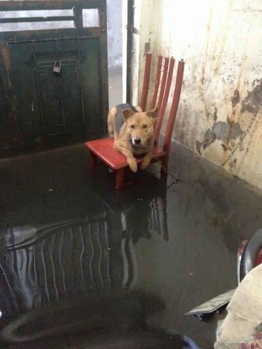"""Phải """"cứu hộ"""" con chó đầu tiên."""