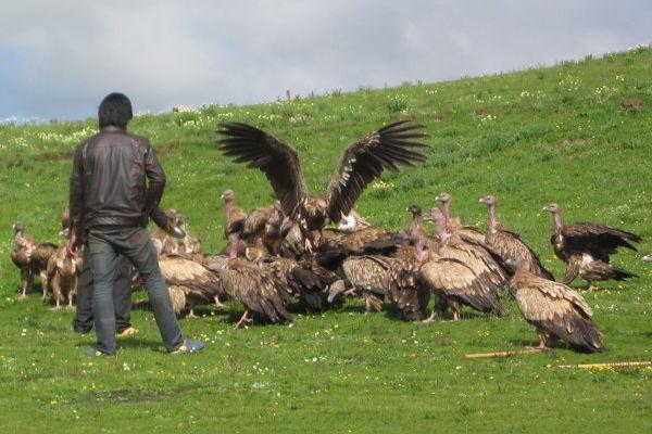 Những con chim này đang túm tụm quanh xác một người thân đã khuất của anh chàng kia.