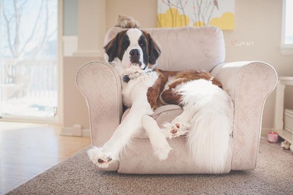 Nó đã quá lớn so với cái ghế của nó rồi.