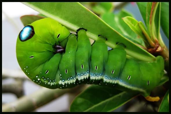 Bức ảnh con sâu xanh lét với đôi mắt kì lạ đang khiến cư dân mạng dậy sóng