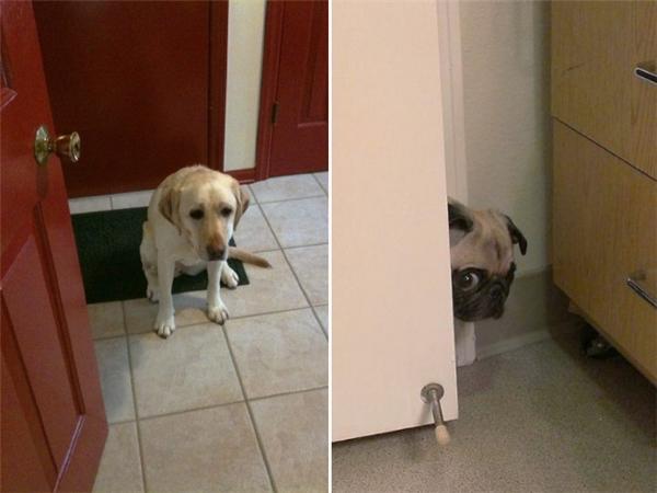 Mở cửa vào nhà mà nhìn thấy cái bản mặt này là biết chúng nó đã mắc tội gì đó rồi.
