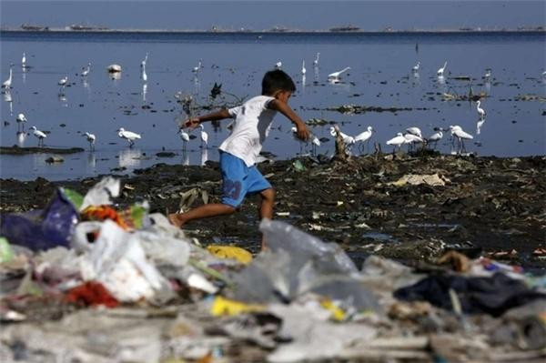 Đàn cò trắng khổ sở kiếm ăn bên bãi biển rác ở Manila, Philippines.