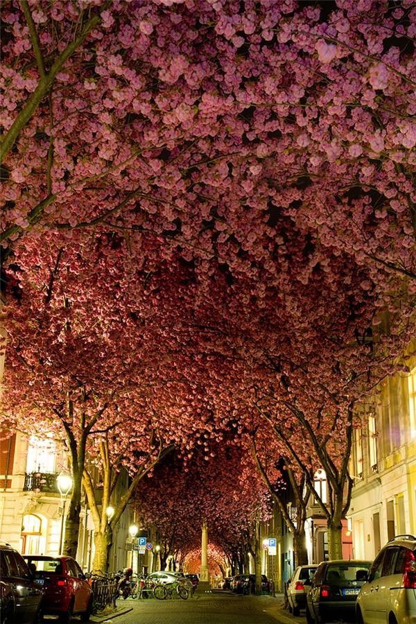 Cứ đến mùa xuân hằng năm, hoa anh đào sẽ nở rộ dọc con đường, tạo nên một bức tranh đầy lãng mạn. Nơi đây lại rất tiện cho những ai muốn tham quan khi nằm ngay trung tâm Berlin, chỉ cách địa điểm tham quan nhà của Beethoven 5 phút đi bộ.
