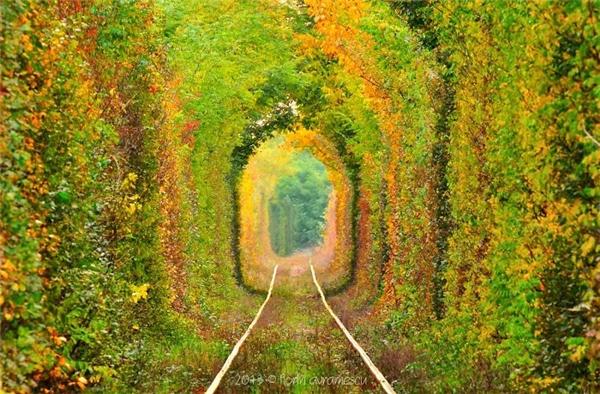 Được bầu chọn là một trong những địa điểm lãng mạn nhất trên thế giới, nơi đây như một chốn thiên đàng của những nhiếp ảnh gia. Đường hầm naỳ được bao bọc bởi tầng tầng lớp lớp cây lá, hút hồn mọi ánh nhìn.