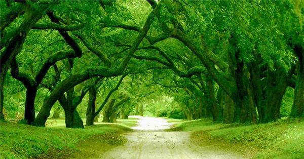 Con đường đến căn nhà lịch sử của Bang Bắc Carolina được bao phủ bởi hai hàng cây cổ thụ. Khi lái xe chạy dọc nơi đây, ta sẽ có cảm giác như đang lạc vào khu rừng trong cổ tích.