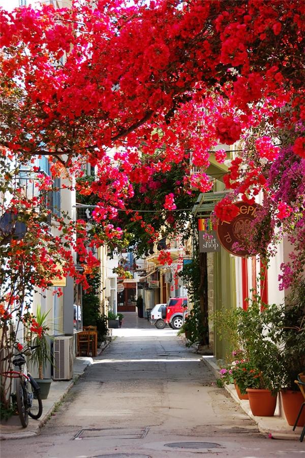 Khi đếnthị trấn ven biển này của Hy Lạp, du khách không khỏi xuýt xoa trước vẻ đẹp của nơi này cũng như con đường hoa giấy rực rỡ sắc màu. Màu đỏ rực của dàn hoa cùng những bức tường trắng như thêm chút chấm phá cho bức tranh thiên nhiên thêm rực rỡ.