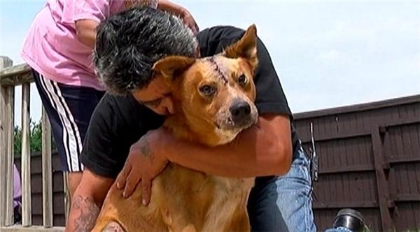 Dù bị xe tông dẫn đến bị thương nặng, Manny Guzmanvẫn nén đau chạy đi tìm chú chó của mình.