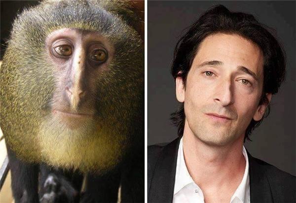 Diễn viên Adrien Brody với vẻ đẹp lãng tử, nam tính và chú khỉ với khuôn mặt không khác anh là mấy.