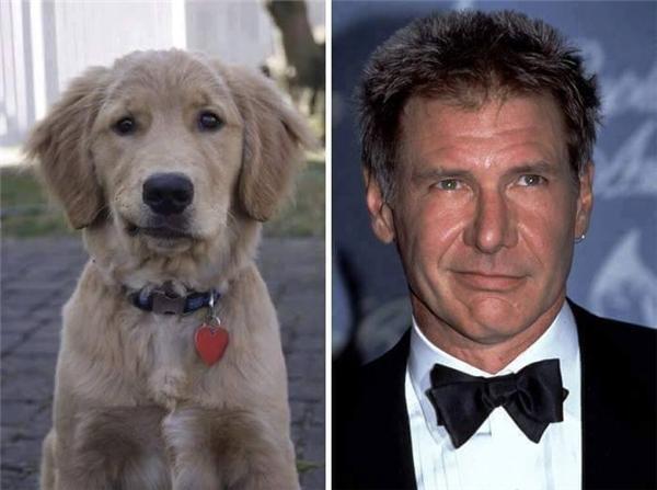 """Nụ cười nhếch mép khiến các thiếu nữ phải """"ngất xỉu"""" của Harrison Ford đã được em cún này bắt chước quá chuẩn."""
