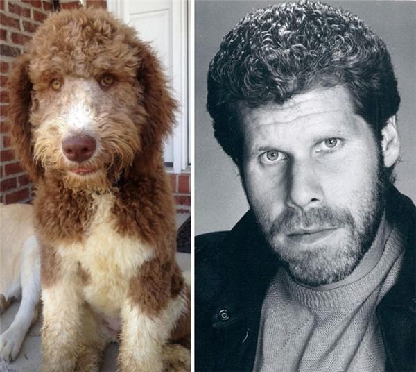 Có thể thấy thần thái của Ron Perlman thời trai trẻ với mái tóc xoăn quá sức quyến rũ ở em cún dễ thương này.