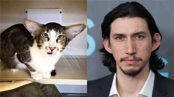 Em mèo này hẳn là đã xem phim của Adam Driver mà trưởng thành.