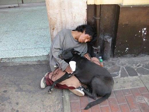 Chó không bao giờ chê chủ nghèo!