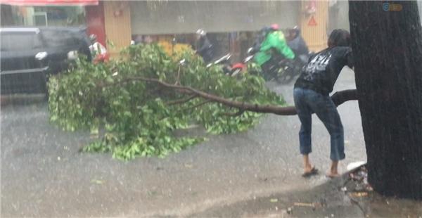 Người thanh niên nỗ lực kéo nhánh cây, nhưng dường nhánh cây quá nặng với anh. (Ảnh cắt từ clip)