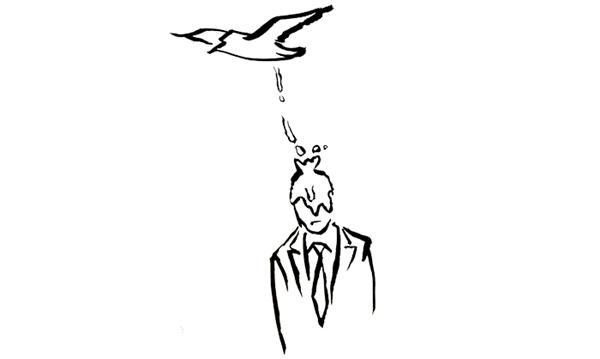Phân chim rơi trúng đầu là dấu hiệumay mắn