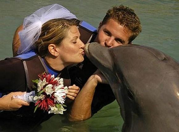 Đám cưới của cô dâu Sharon và chú rể cá heo được diễn ra vào năm 2006