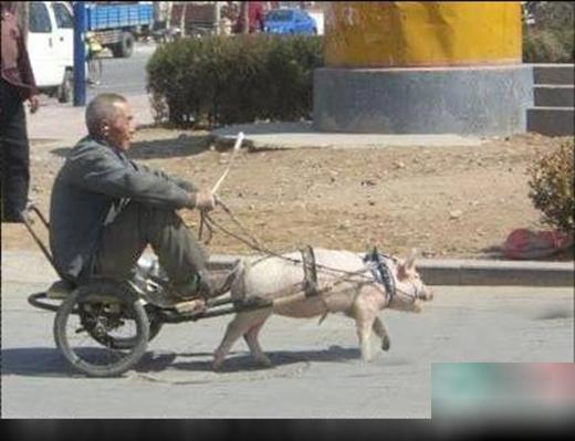 Người ta có ngựa làm xe, nhà tôi chỉ có con lợn. Thôi thì cứ có niềm tin vào nó thôi! Tốc độ không quan trọng, cứ từ từ thôi con trai à!