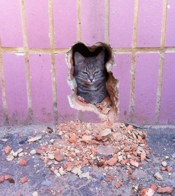 5. Có lẽ cái lỗ thủng trên tường này sinh ra là dành cho mèo.