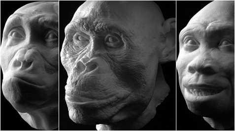 Tổ tiên loài người cũng đã có nhân trung từ rất xa xưa. (Ảnh: Internet)