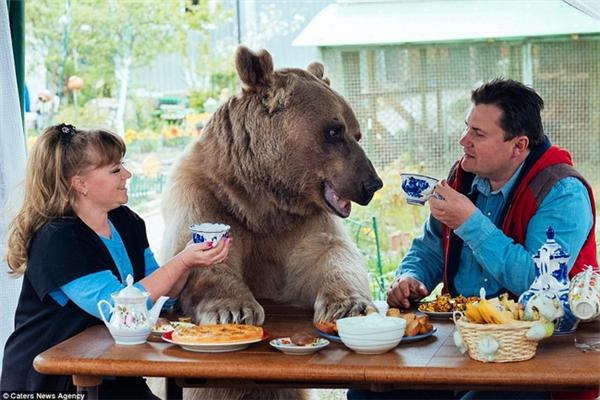 Vợ chồng ông Yuriy đã có 23 năm chung sống với chú gấu Stepan dưới mái ấm của mình.