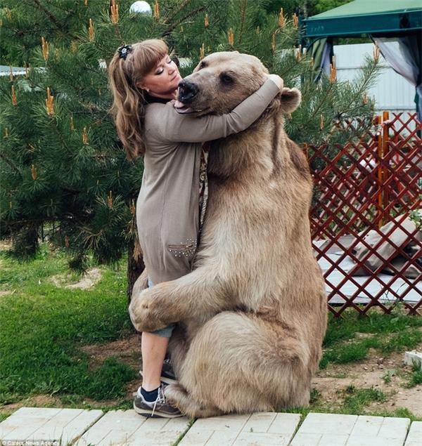 Thanh niên gấu dù đã lớn nhưng vẫn thích ôm ấp mẹ.
