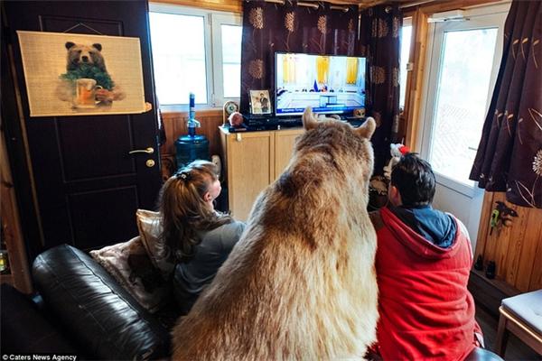 Stepan chăm chú ngồi xem tivi cùng với vợ chồng ông Yuriy.