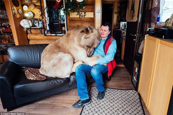 Lâu nay, chú gấu khổng lồ này vẫn được coi như một đứa con nhỏ trong gia đình.