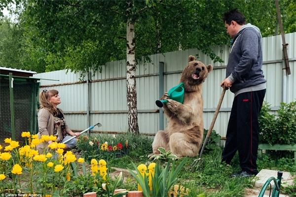 Stepan thậm chí còn biết tưới cây giúp cho bố mẹ nuôi.