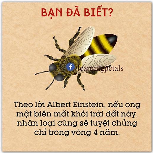 Có phải là do ong mật biến mất thì gấu cũng sẽ biến mất và cứ thế dây chuyền theo nhau biến mất hết không?
