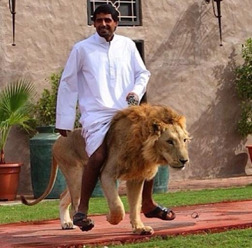 Cưỡi ngựa thì có gì là hay? Giờ là thời đại của sư tử nha!(Ảnh: Internet)