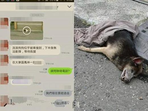 Hiệp hội động vật nhận được thông báo một con chó đáng thương bị xe đụng.