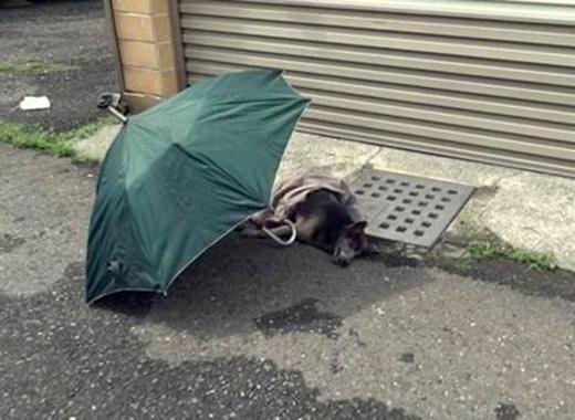 Cô gái lấy dù che cho con chó trong lúc chờ nhân viên cứu hộ tới.