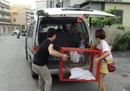 Cô gái phụ giúp nhân viên đưa con chó lên xe.