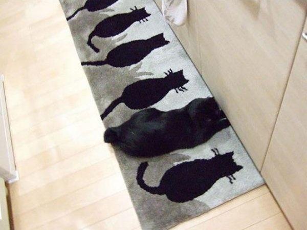 Mèo là loài vật rất giỏi ngụy trang, mỗi lần nó trốn là tìm ra được ngay.