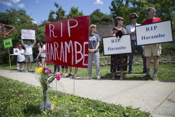 Dư luận sục sôiđòi công lý cho Harambe.(Ảnh: AP)