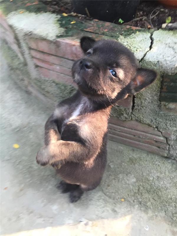Tan chảy trước cún anh ôm cún em một khắc cũng không buông