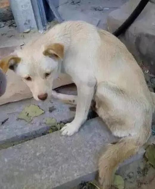 Con chó nhỏ trông rất yếu ớt.