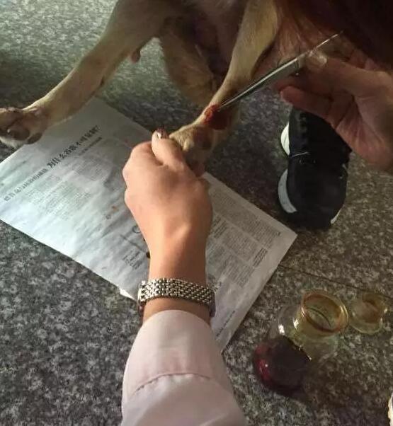 Cảm động với tình mẫu tử của chú chó mẹ đáng thương