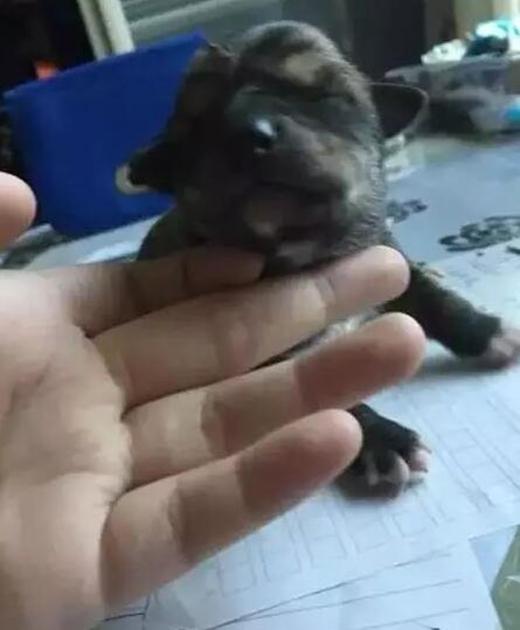 Trong lúc chờ được nhận nuôi, bốn chú chó con cùng mẹ đang được trung tâm y tế chăm sóc.