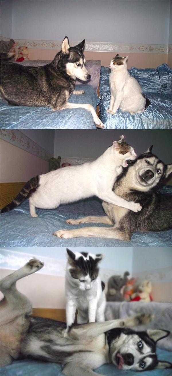 Những cuộc chiến với con mèo không bao giờ có hồi kết, vì nó còn chưa kịp bắt đầu đã có kết quả.