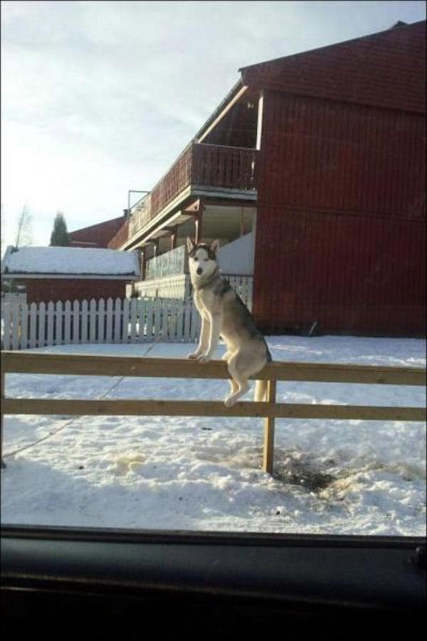 Cả cái xóm này chỉ có mình nó không biết thực ra nó là con mèo.