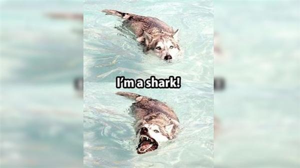 Ta là con cá mập đây!