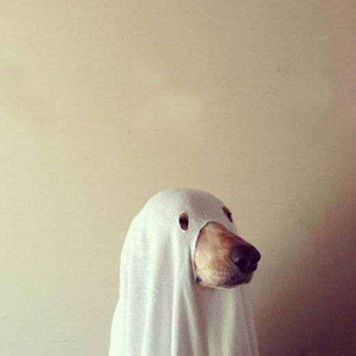 Thí nghiệm hồi sinh người chết được thử nghiệm trên loài chó. (Ảnh: Internet)