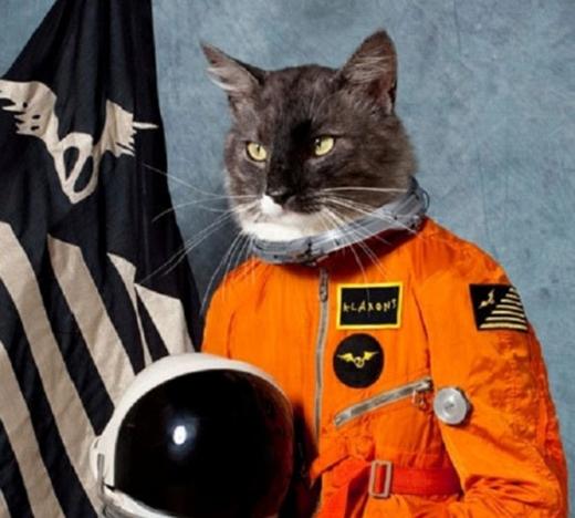Thí nghiệm mèo điệp viênnhận hậu quả thảm hại khi con mèo lao vào taxi và chết. (Ảnh: Internet)