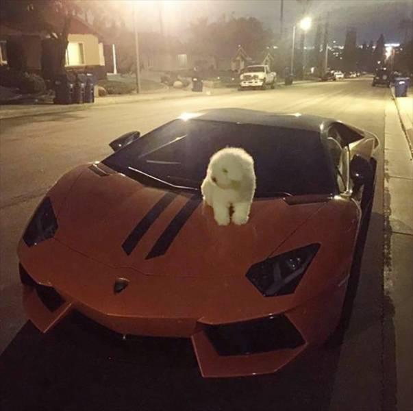 Đây chỉ mới là xe của... cún cưng thôi nhé.